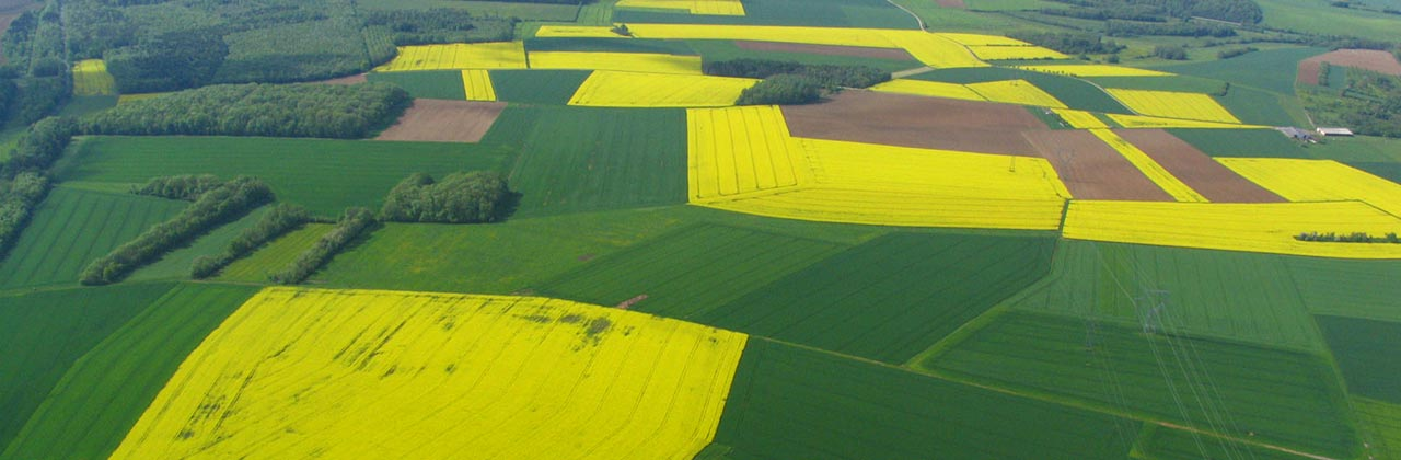 aerial-photo-rapeseed-fields.jpg