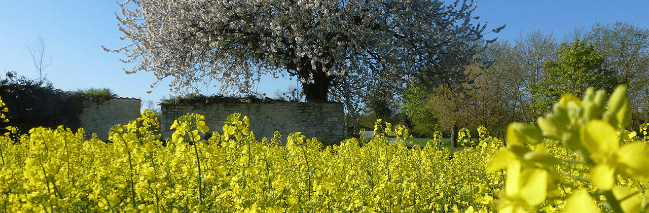 Rapeseed_landscape_GCIRC.png